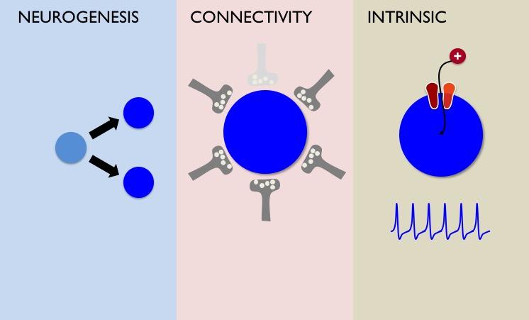 Mechanisms of development